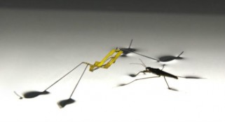 Amazing Jesus bug robot leaps from the water's surface